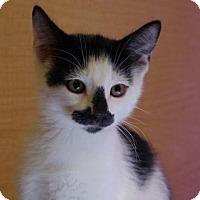 Adopt A Pet :: Lenny - San Jose, CA