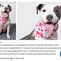 Adopt A Pet :: Cindy Lou - Pompano Beach, FL