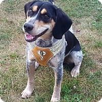 Adopt A Pet :: SWAYZE - Albany, NY