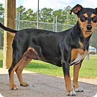 Adopt A Pet :: Xandora - Savannah, TN