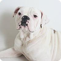 Adopt A Pet :: Sophia - Redding, CA