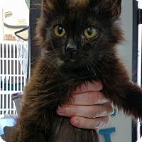 Adopt A Pet :: Piccolo - Rocklin, CA