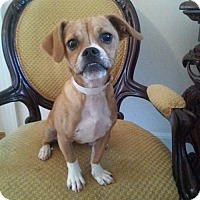 Adopt A Pet :: Zoe - Edgewater, NJ