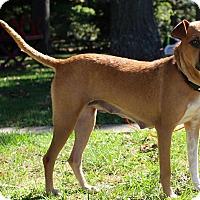 Adopt A Pet :: Elizabeth - New Oxford, PA