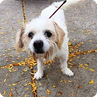 Terrier (Unknown Type, Small) Mix Dog for adoption in Chicago, Illinois - Frankenstein