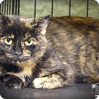 Adopt A Pet :: Speckles - Marlinton, WV