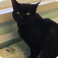 Adopt A Pet :: Ophelia - Woodhaven, MI