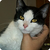 Adopt A Pet :: Pookie - Mexia, TX
