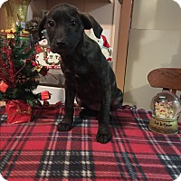 Adopt A Pet :: Echo - Kittery, ME
