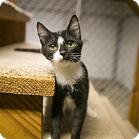 Adopt A Pet :: Geppetto - Columbia, TN