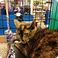 Adopt A Pet :: Serenity - Avon, OH