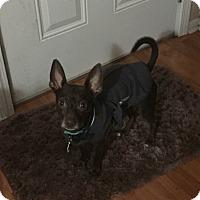 Adopt A Pet :: Oscar - Clarksville, TN