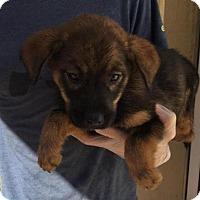 Adopt A Pet :: Kala - Livingston, TX