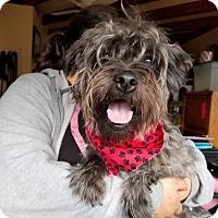 Adopt A Pet :: Pedro - Apple Valley, CA