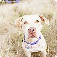 Adopt A Pet :: Lily(Tracey) - Shrewsbury, NJ