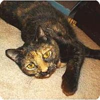 Adopt A Pet :: Gigi - Colmar, PA