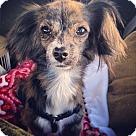 Adopt A Pet :: Pebbles