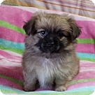Adopt A Pet :: Squeaks