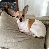 Adopt A Pet :: Navi - ADOPTED!! - Albion, RI