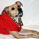 Adopt A Pet :: Tessa