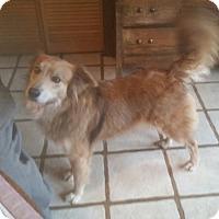 Adopt A Pet :: RITA - Paron, AR