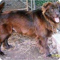 Adopt A Pet :: Yuma - Lincolndale, NY