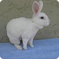Adopt A Pet :: Nubbins - Bonita, CA