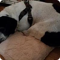 Adopt A Pet :: Skipper - Brooklyn, NY