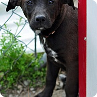 Adopt A Pet :: Zola - Pleasant Plain, OH