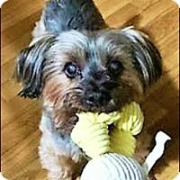 Adopt A Pet :: Daphne - Whiting, NJ