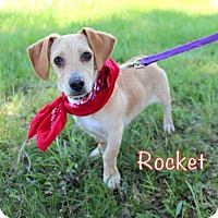 Adopt A Pet :: Rocket (and Pinkie) - Groton, MA