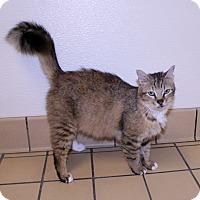 Adopt A Pet :: Savannah - Lumberton, NC