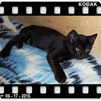Adopt A Pet :: TUGGER - Medford, WI