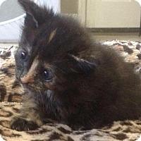 Adopt A Pet :: Luna - Delray Beach, FL