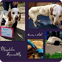 Adopt A Pet :: Magdelene Specadilly - Washington, PA