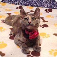 Adopt A Pet :: Gracie - Antioch, CA