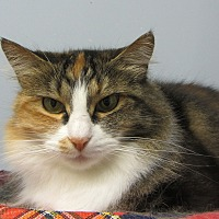 Adopt A Pet :: Leelah - Kingston, WA
