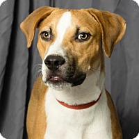 Adopt A Pet :: La Howie - Tulsa, OK
