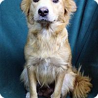Adopt A Pet :: MARIANA - Westminster, CO