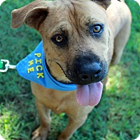 Adopt A Pet :: Willow - Youngsville, NC