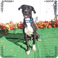 Adopt A Pet :: BOB aka SCOUT - Marietta, GA
