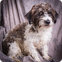 Adopt A Pet :: ROSCOE - Anna, IL