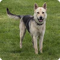 Adopt A Pet :: BRODY - McKenna, WA