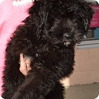 Adopt A Pet :: Jacques - Simi Valley, CA