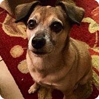 Adopt A Pet :: Kolby - Logan, UT