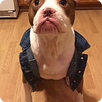 Adopt A Pet :: Ryker - Dayton, OH