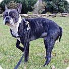 Adopt A Pet :: Benton