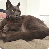 Adopt A Pet :: Misha - Palmdale, CA