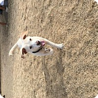 Adopt A Pet :: Razor - Broomfield, CO
