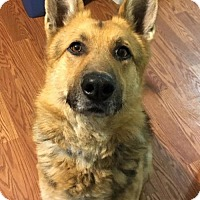 Adopt A Pet :: Bruce - Clarkston, MI